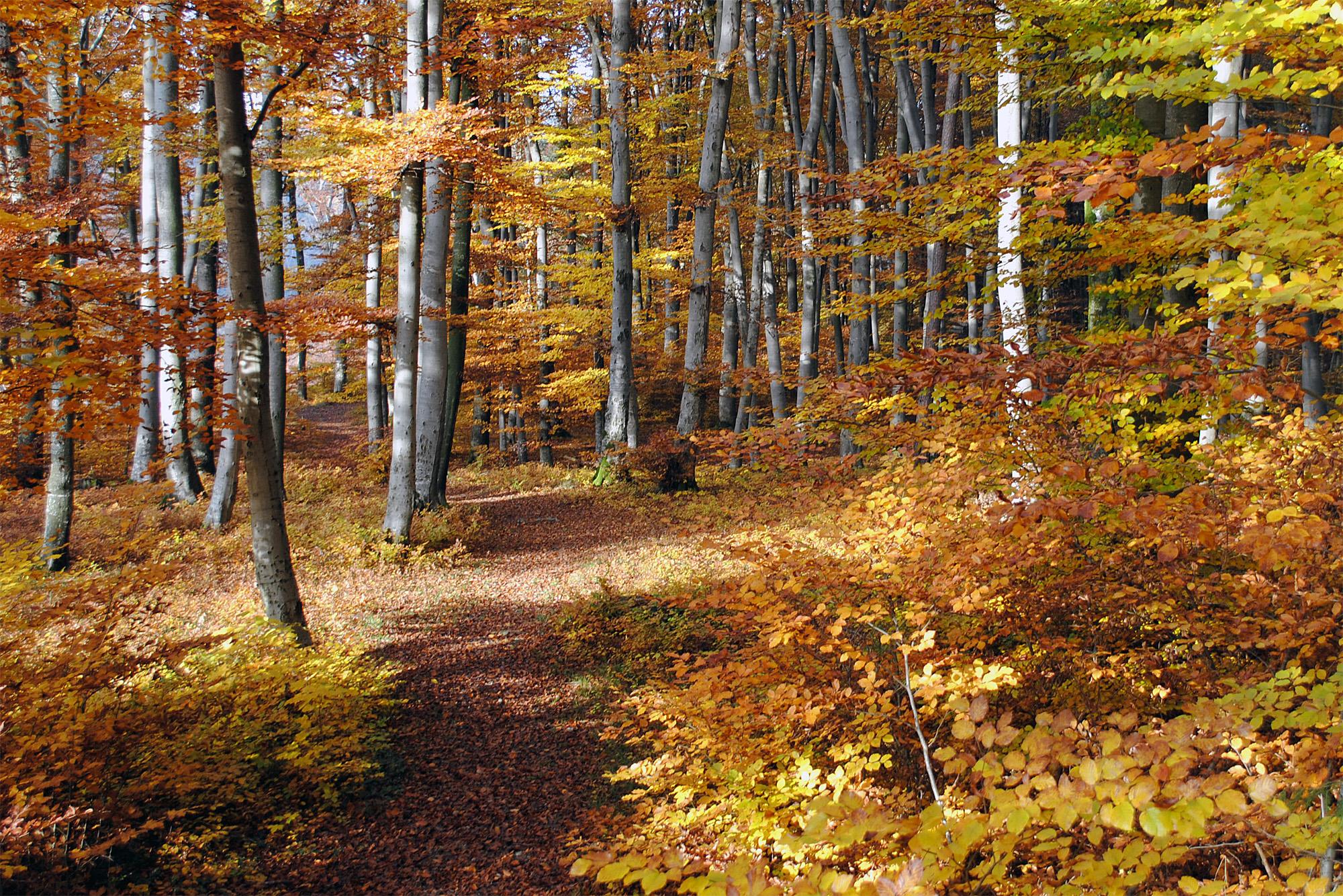 Herbstzeit In Burghausen